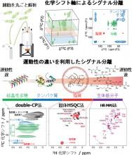真:多次元固体NMR法によるユーグレナ解析ⓒ理研